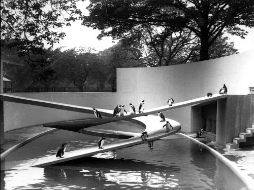 © ZSL - Lubetkin Penguin Pool