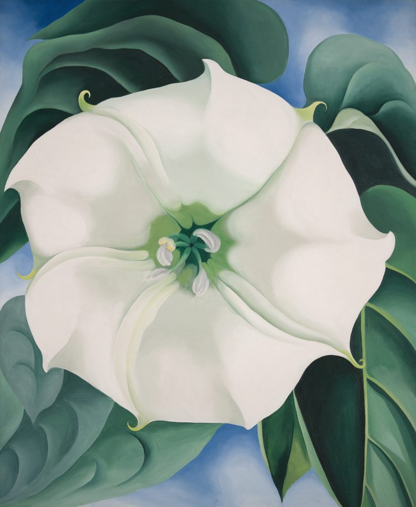 Georgia O'Keeffe Jimson Weed/White Flower No. 1, 1932 Crystal Bridges Museum of American Art, Arkansas, USA Photography by Edward C. Robison III© 2016 Georgia O'Keeffe Museum/DACS, London